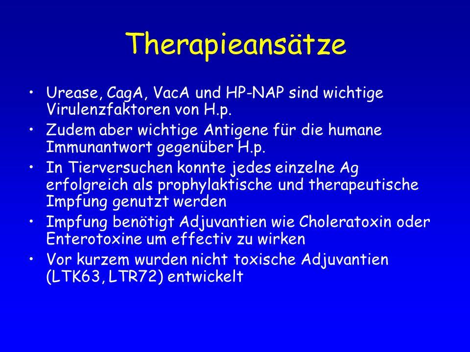 Therapieansätze Urease, CagA, VacA und HP-NAP sind wichtige Virulenzfaktoren von H.p.