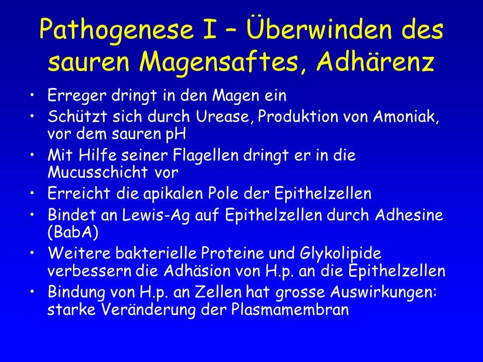 Pathogenese I – Überwinden des sauren Magensaftes, Adhärenz