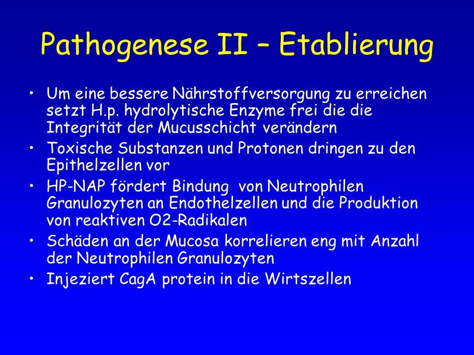 Pathogenese II – Etablierung