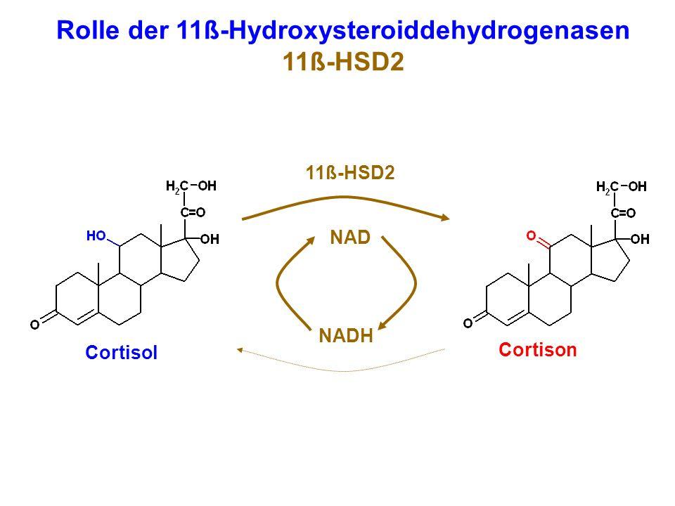 Rolle der 11ß-Hydroxysteroiddehydrogenasen