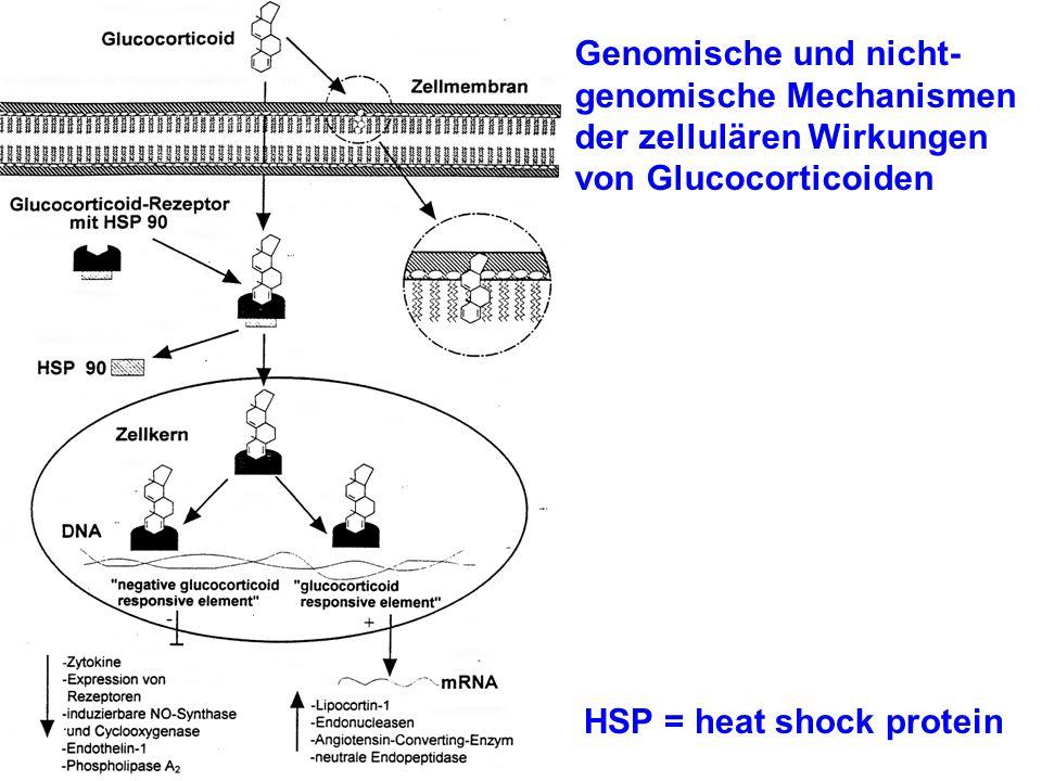 Genomische und nicht-genomische Mechanismen der zellulären Wirkungen von Glucocorticoiden