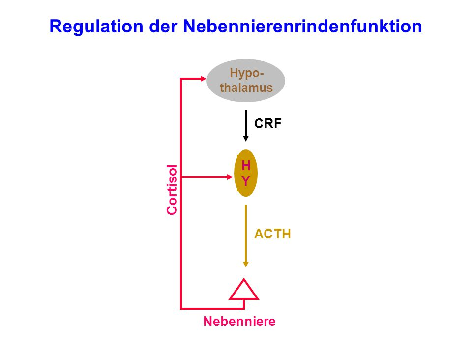 Regulation der Nebennierenrindenfunktion