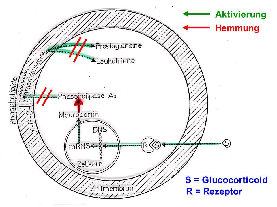 Aktivierung Hemmung S = Glucocorticoid R = Rezeptor