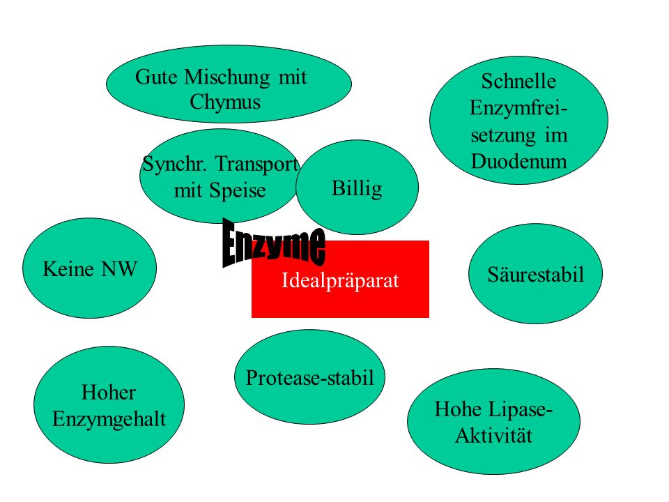 Enzyme Gute Mischung mit Schnelle Enzymfrei- Chymus setzung im