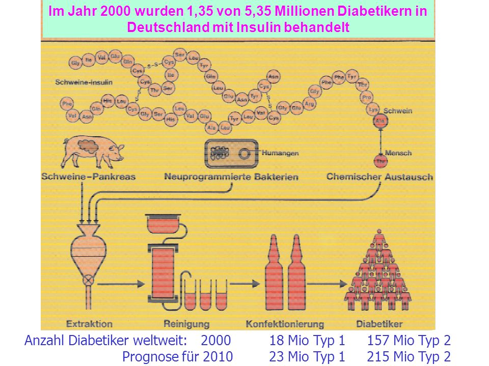 Im Jahr 2000 wurden 1,35 von 5,35 Millionen Diabetikern in Deutschland mit Insulin behandelt