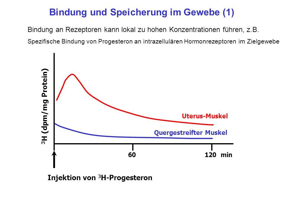 Bindung und Speicherung im Gewebe (1)