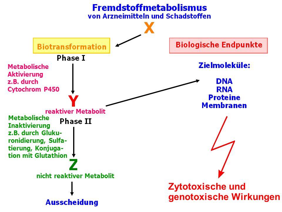 genotoxische Wirkungen