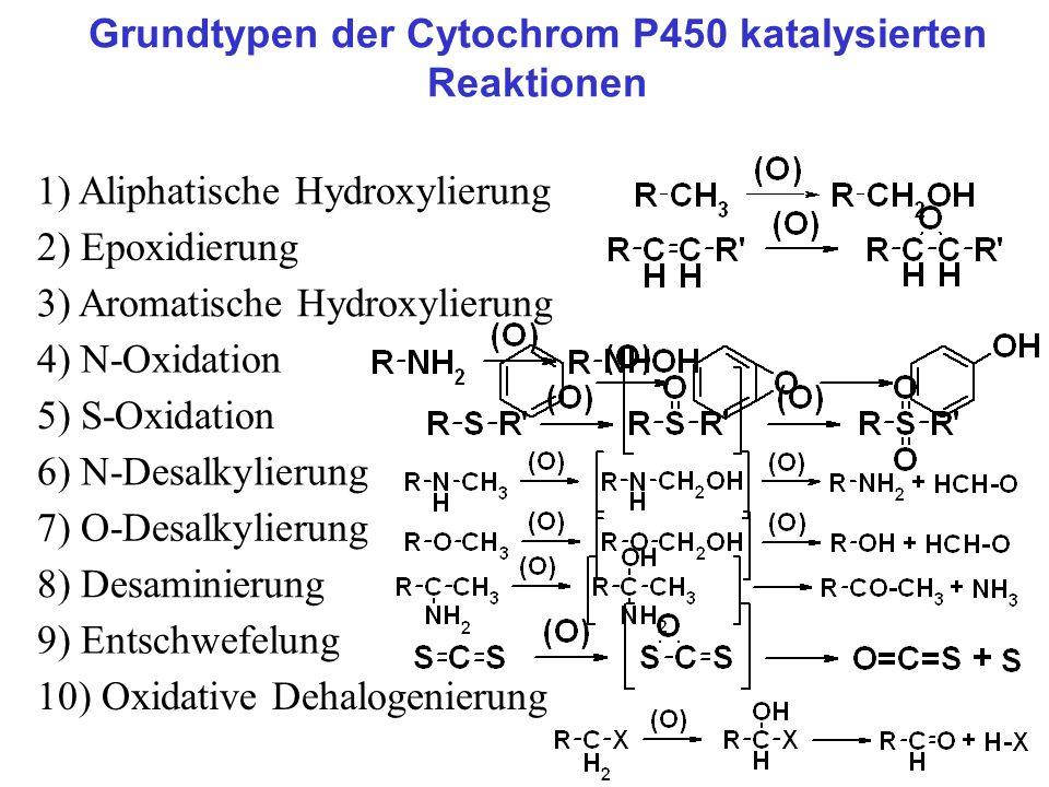 Grundtypen der Cytochrom P450 katalysierten Reaktionen