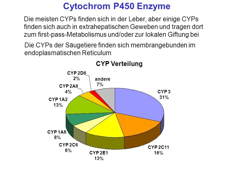 Cytochrom P450 Enzyme