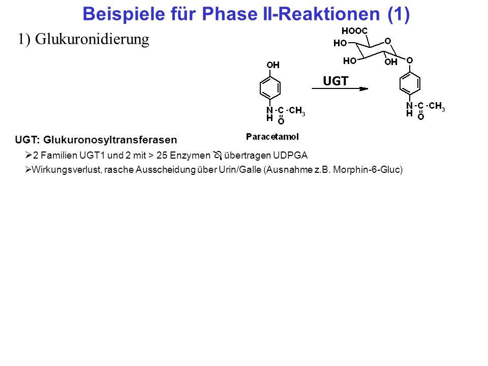 Beispiele für Phase II-Reaktionen (1)