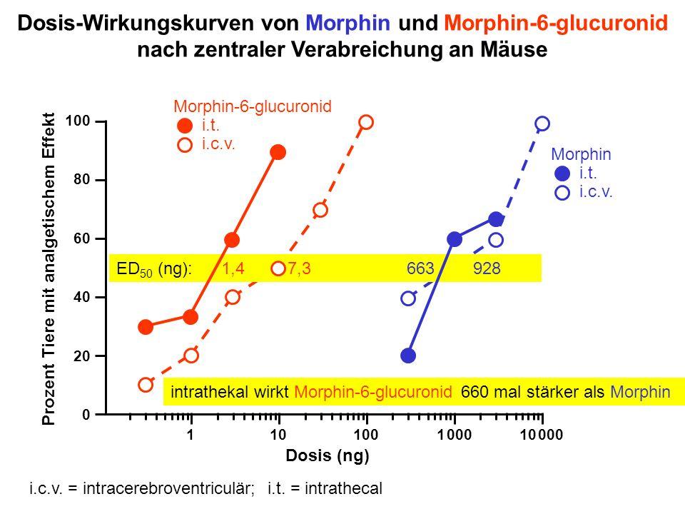 Dosis-Wirkungskurven von Morphin und Morphin-6-glucuronid nach zentraler Verabreichung an Mäuse