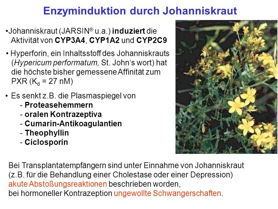 Enzyminduktion durch Johanniskraut