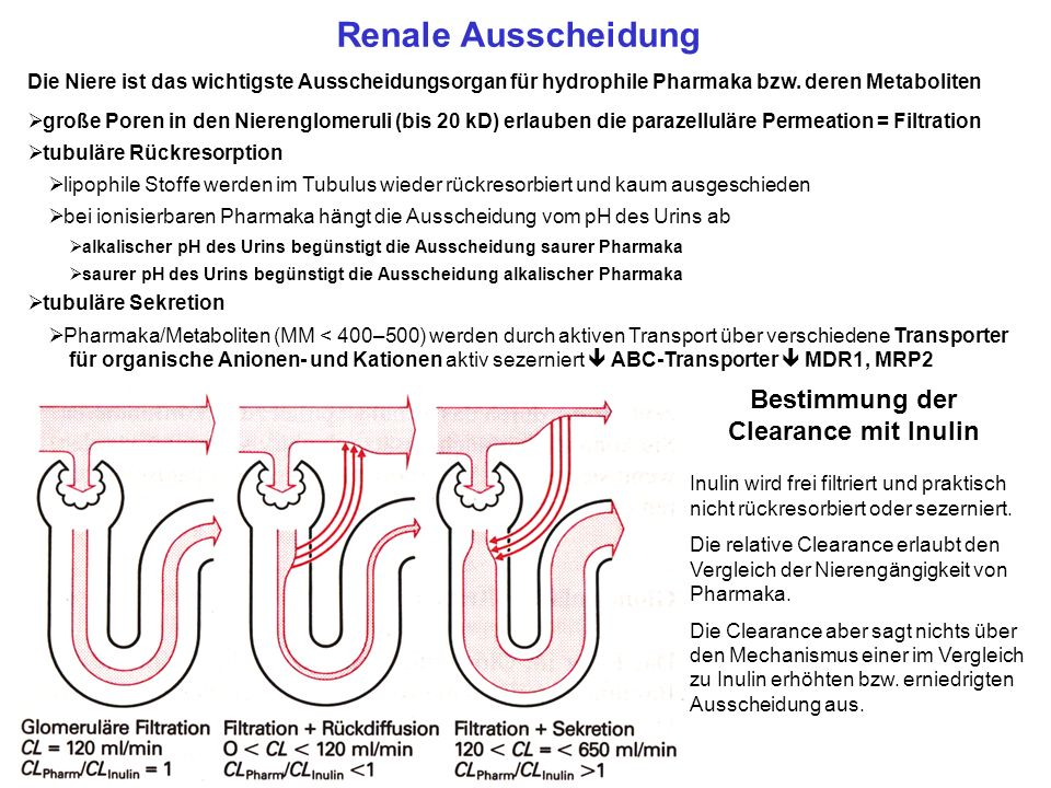 Bestimmung der Clearance mit Inulin