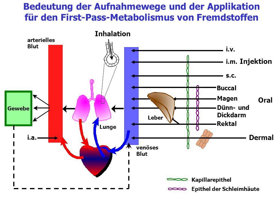 Bedeutung der Aufnahmewege und der Applikation für den First-Pass-Metabolismus von Fremdstoffen