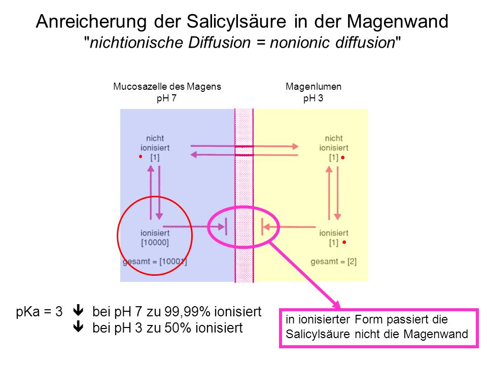 Anreicherung der Salicylsäure in der Magenwand