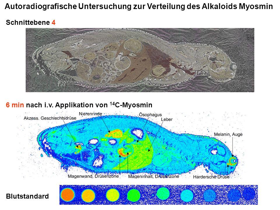 Autoradiografische Untersuchung zur Verteilung des Alkaloids Myosmin