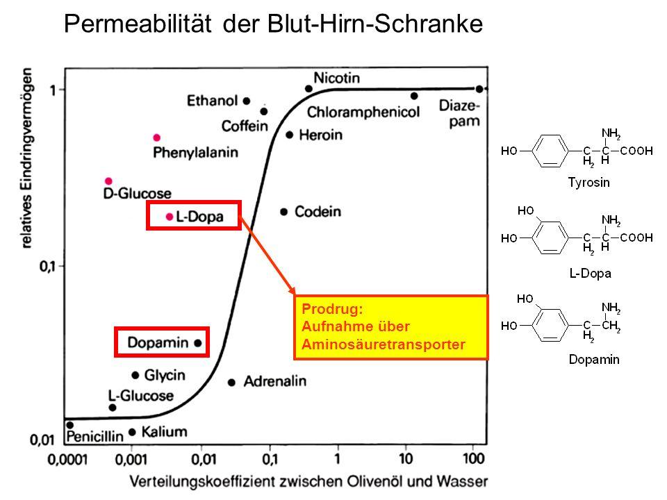 Permeabilität der Blut-Hirn-Schranke