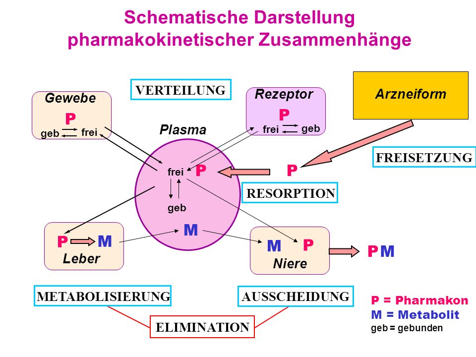 Schematische Darstellung pharmakokinetischer Zusammenhänge