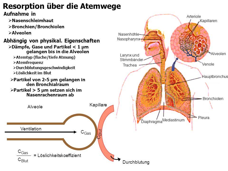Resorption über die Atemwege