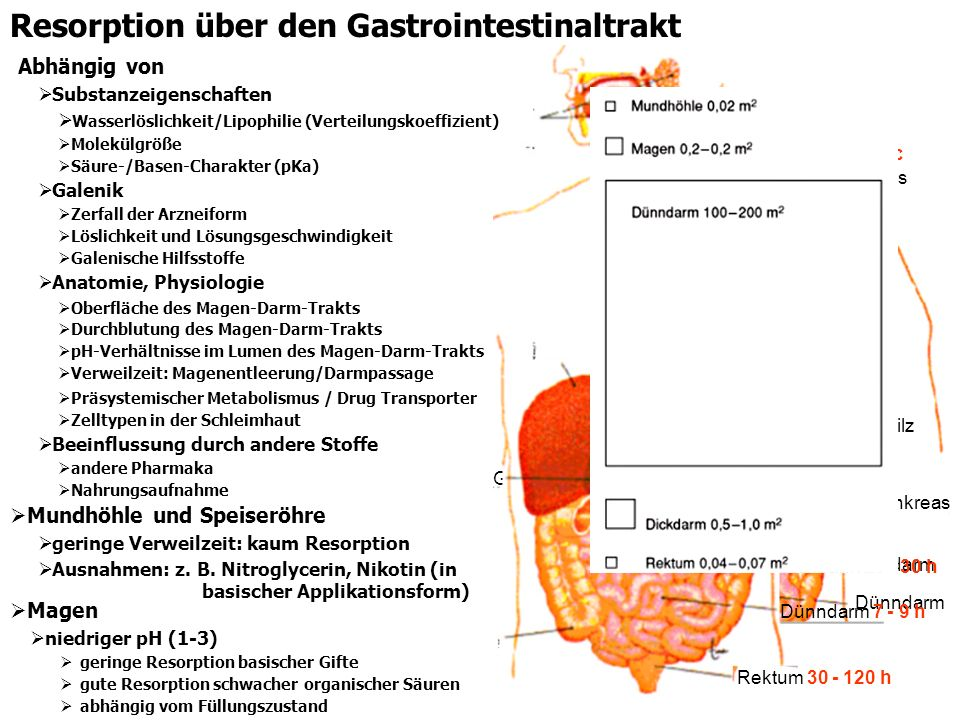 Resorption über den Gastrointestinaltrakt