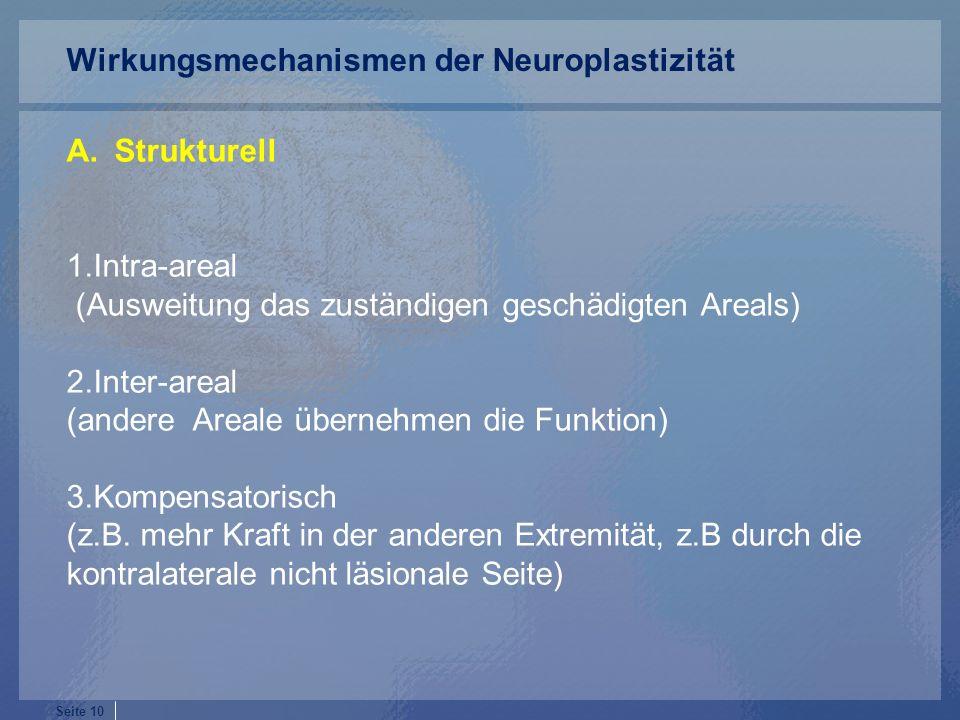 Wirkungsmechanismen der Neuroplastizität