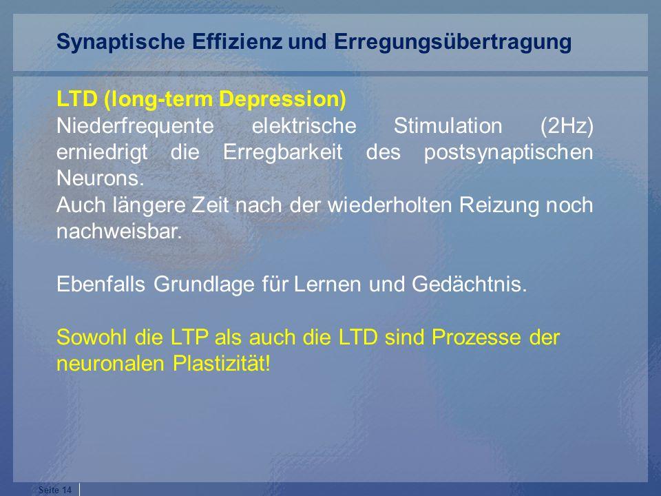 Synaptische Effizienz und Erregungsübertragung