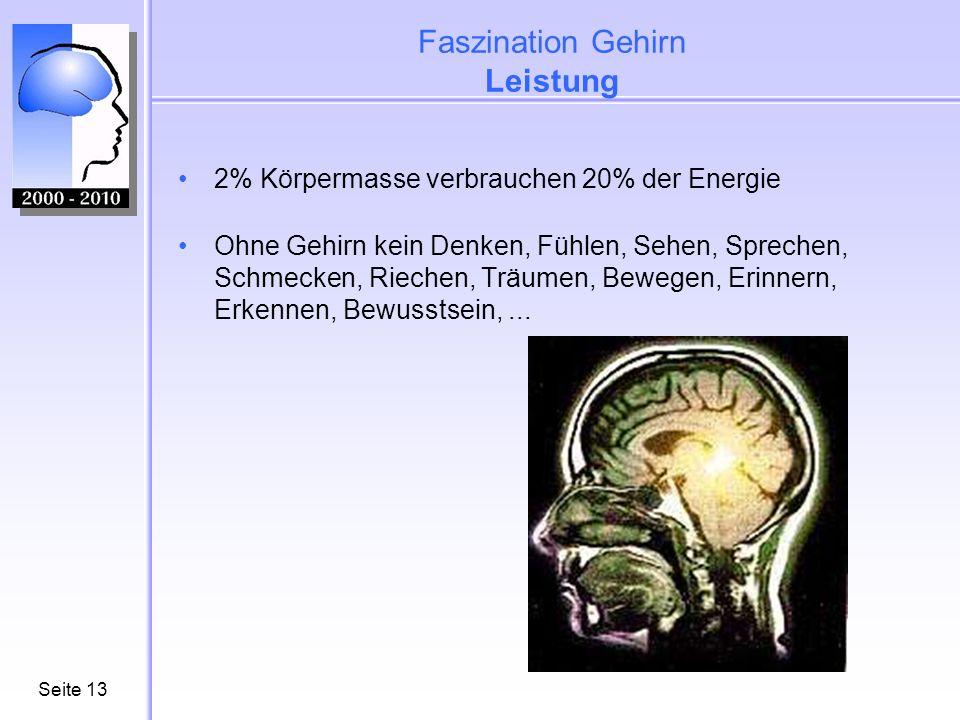 Faszination Gehirn Leistung