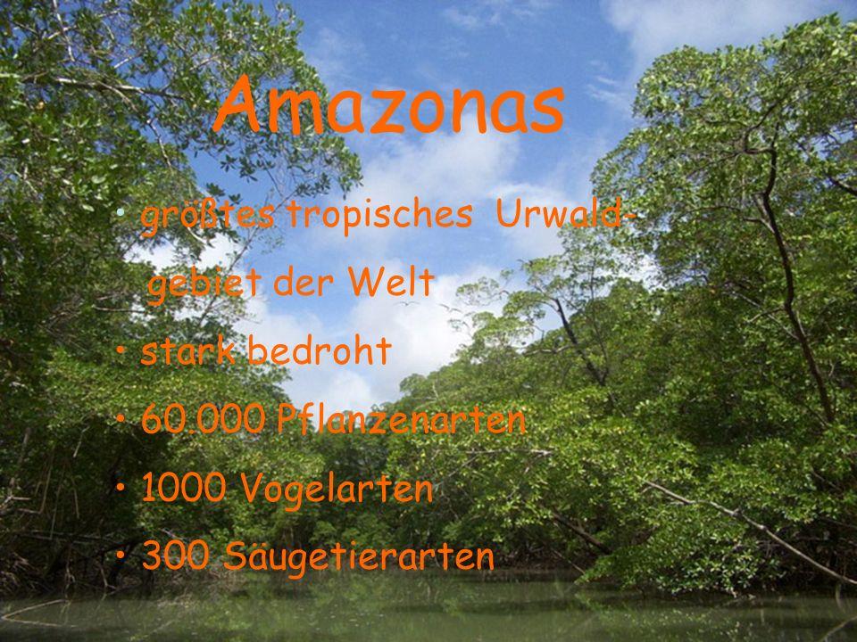 Amazonas Amazonas größtes tropisches Urwald- gebiet der Welt