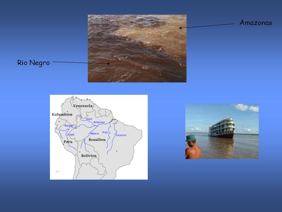 Amazonas Rio Negro