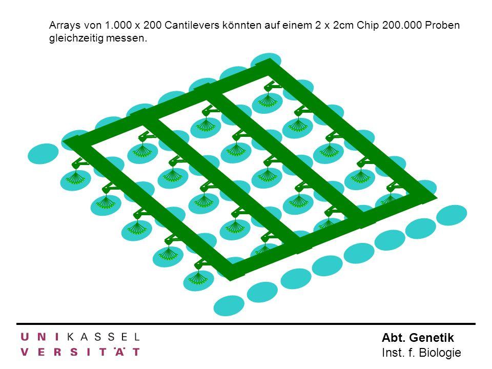 Arrays von 1. 000 x 200 Cantilevers könnten auf einem 2 x 2cm Chip 200