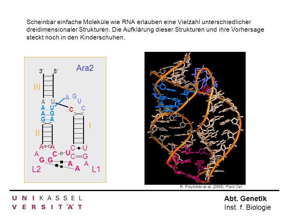 Scheinbar einfache Moleküle wie RNA erlauben eine Vielzahl unterschiedlicher dreidimensionaler Strukturen. Die Aufklärung dieser Strukturen und ihre Vorhersage steckt noch in den Kinderschuhen.
