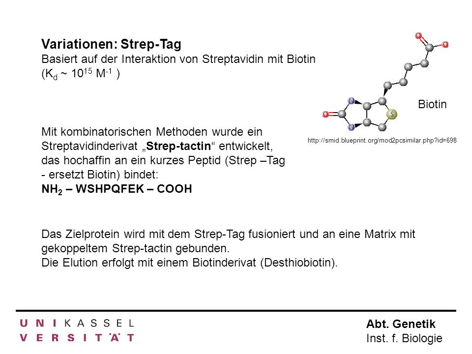 Variationen: Strep-Tag