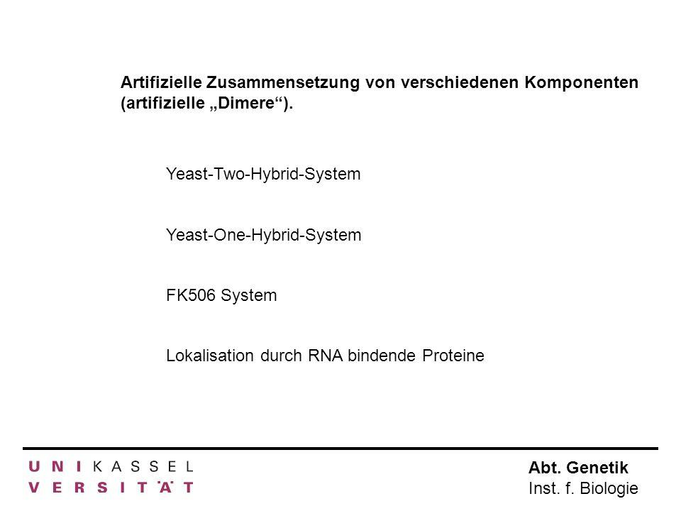 """Artifizielle Zusammensetzung von verschiedenen Komponenten (artifizielle """"Dimere )."""