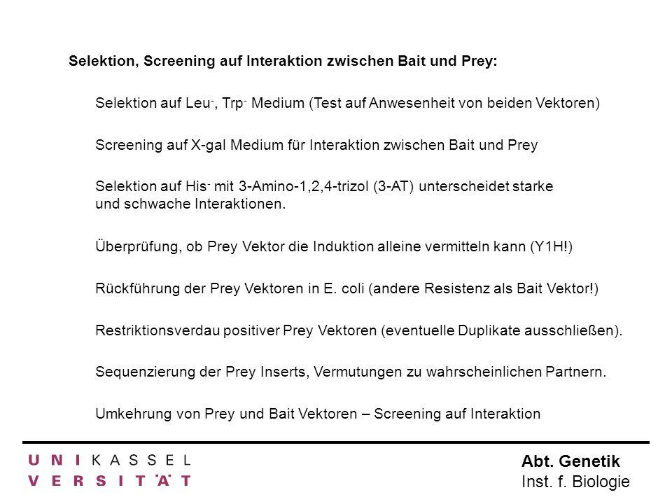 Selektion, Screening auf Interaktion zwischen Bait und Prey: