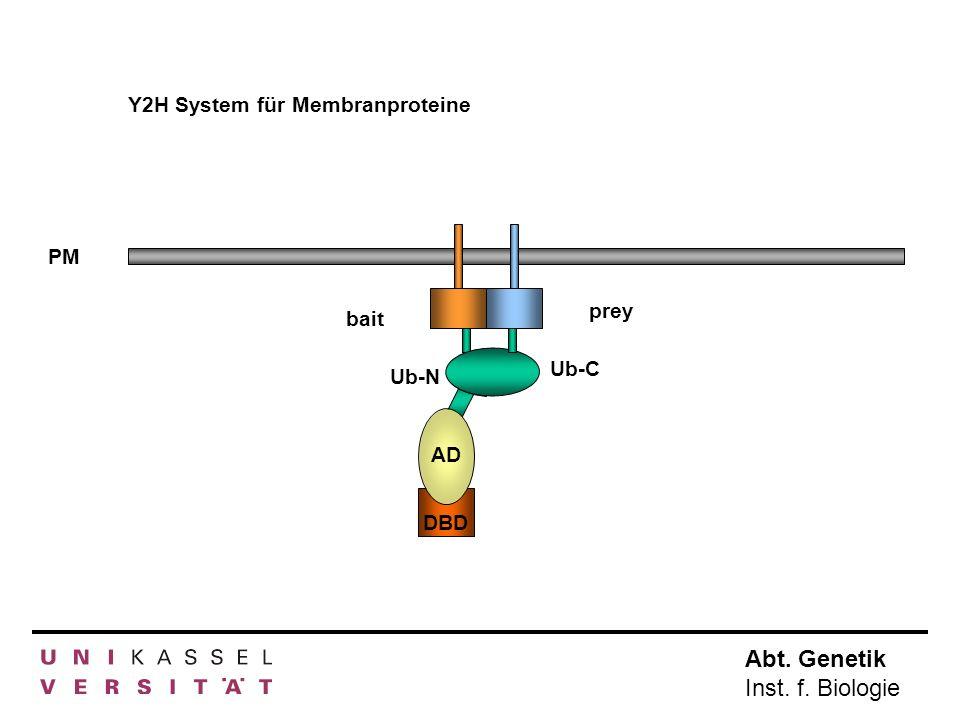 Y2H System für Membranproteine