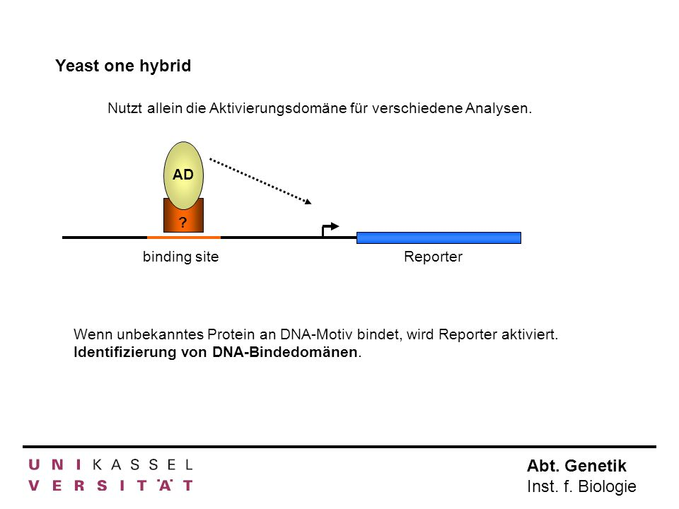 Yeast one hybrid Nutzt allein die Aktivierungsdomäne für verschiedene Analysen. AD. Reporter. binding site.