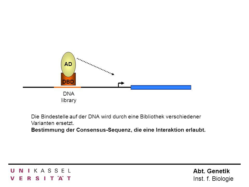 AD DBD. DNA library. Die Bindestelle auf der DNA wird durch eine Bibliothek verschiedener Varianten ersetzt.