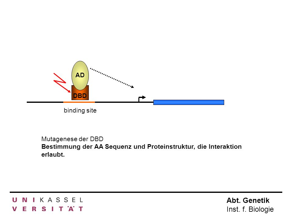 AD DBD. binding site. Mutagenese der DBD.
