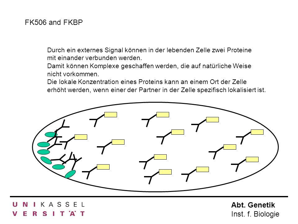 FK506 and FKBP Durch ein externes Signal können in der lebenden Zelle zwei Proteine mit einander verbunden werden.