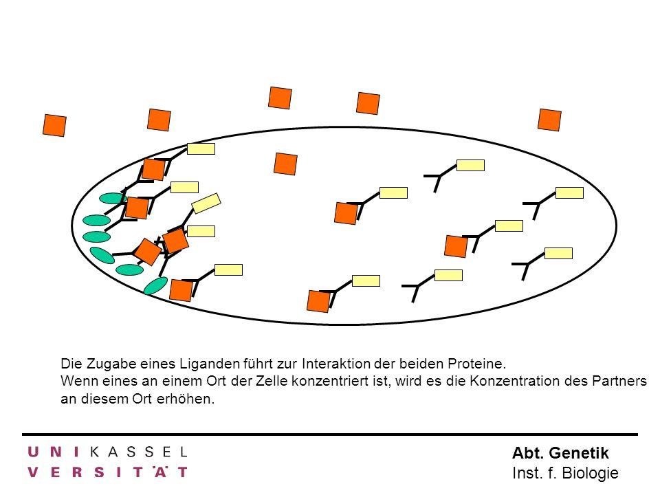 Die Zugabe eines Liganden führt zur Interaktion der beiden Proteine