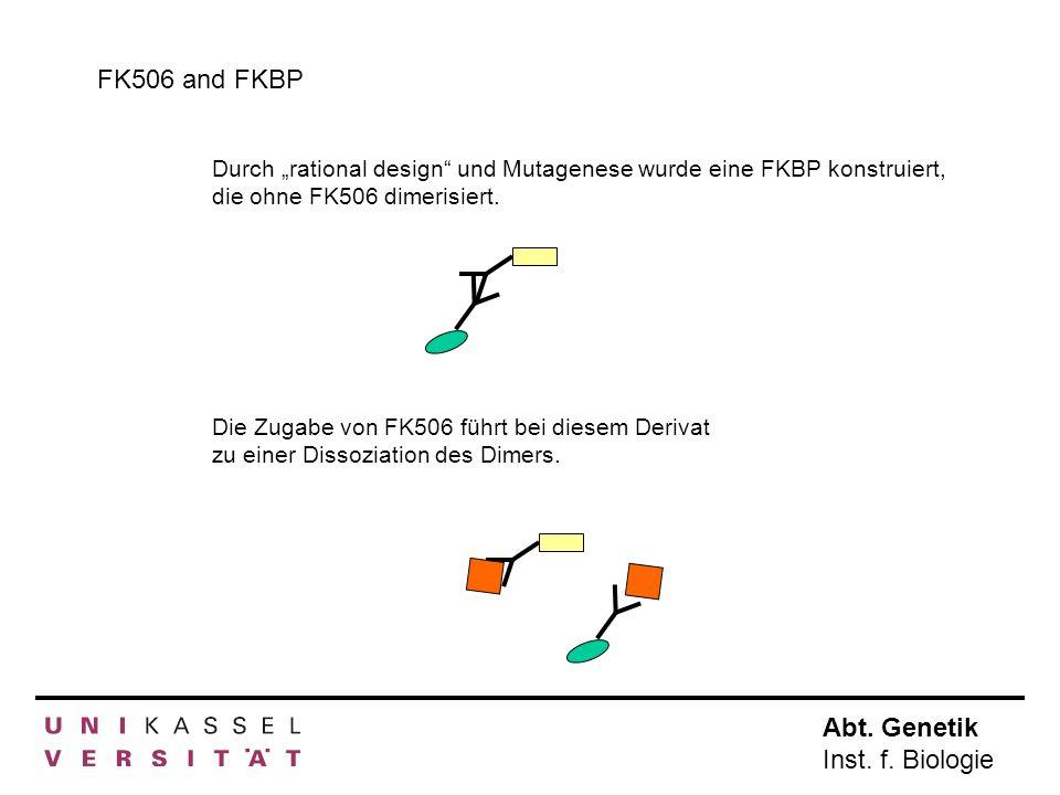 """FK506 and FKBPDurch """"rational design und Mutagenese wurde eine FKBP konstruiert, die ohne FK506 dimerisiert."""