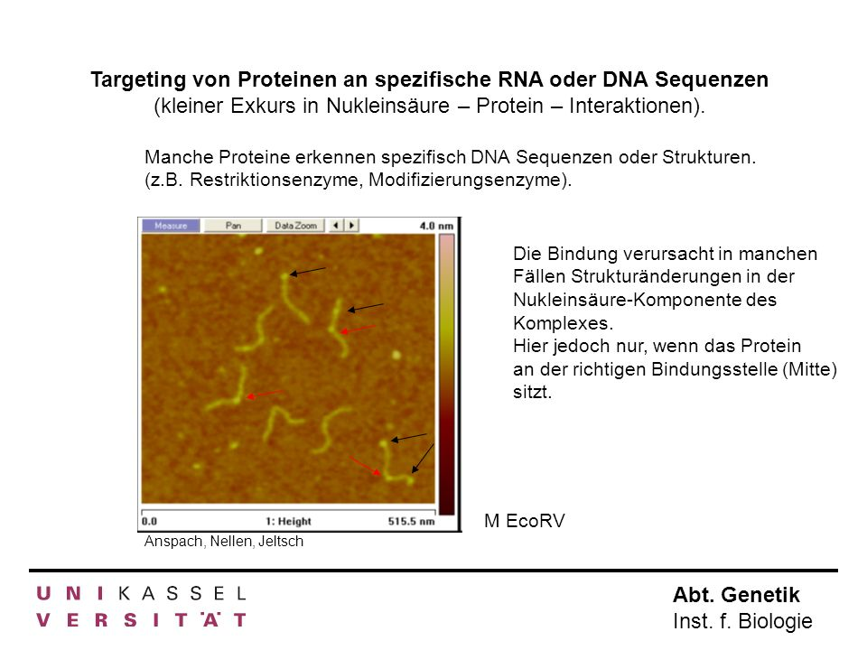 Targeting von Proteinen an spezifische RNA oder DNA Sequenzen (kleiner Exkurs in Nukleinsäure – Protein – Interaktionen).