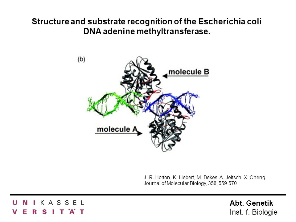 Structure and substrate recognition of the Escherichia coli DNA adenine methyltransferase.