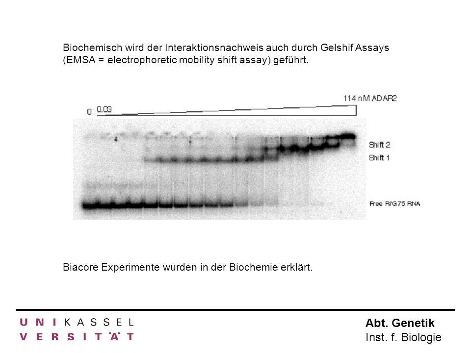 Biochemisch wird der Interaktionsnachweis auch durch Gelshif Assays (EMSA = electrophoretic mobility shift assay) geführt.