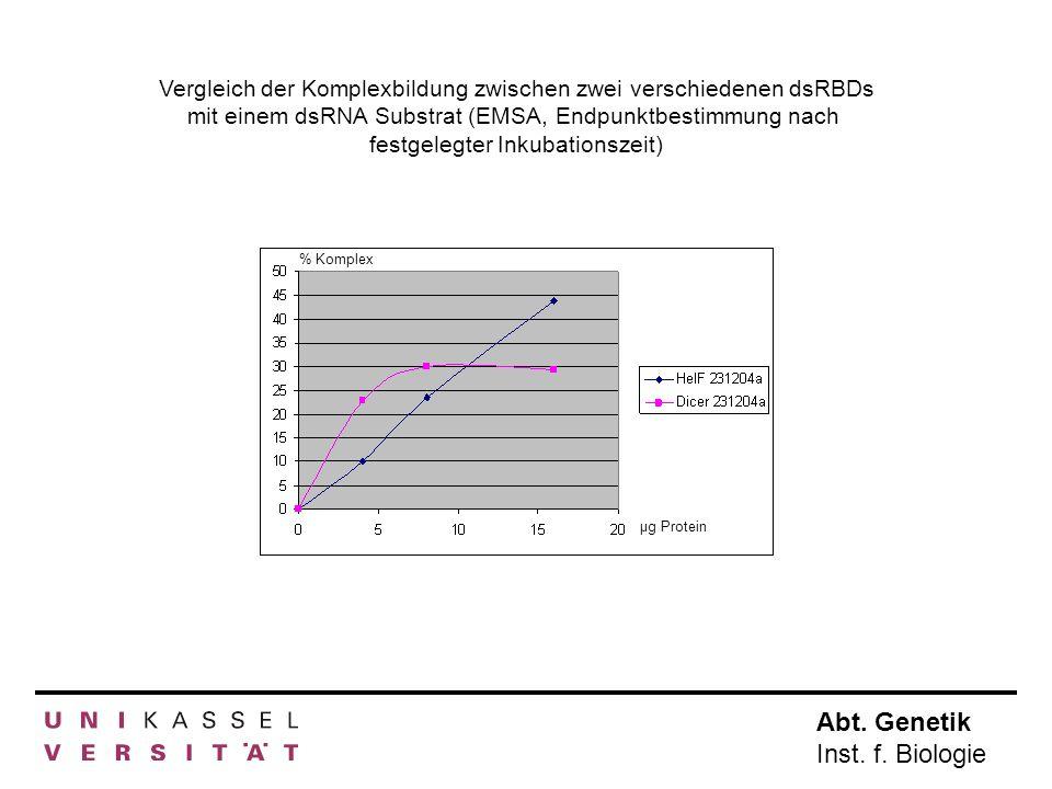 Vergleich der Komplexbildung zwischen zwei verschiedenen dsRBDs mit einem dsRNA Substrat (EMSA, Endpunktbestimmung nach festgelegter Inkubationszeit)