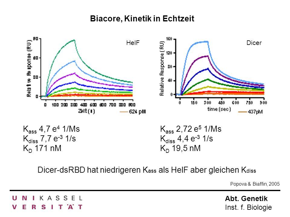 Biacore, Kinetik in Echtzeit