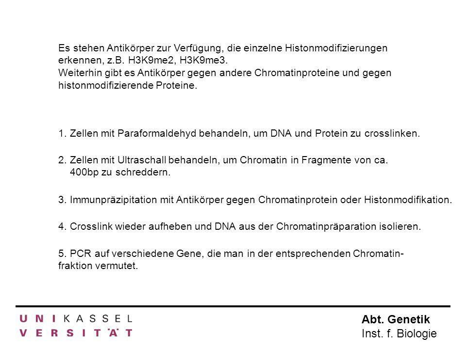 Es stehen Antikörper zur Verfügung, die einzelne Histonmodifizierungen erkennen, z.B. H3K9me2, H3K9me3.