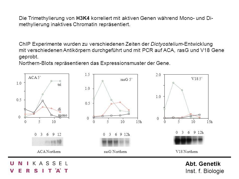 Die Trimethylierung von H3K4 korreliert mit aktiven Genen während Mono- und Di- methylierung inaktives Chromatin repräsentiert.