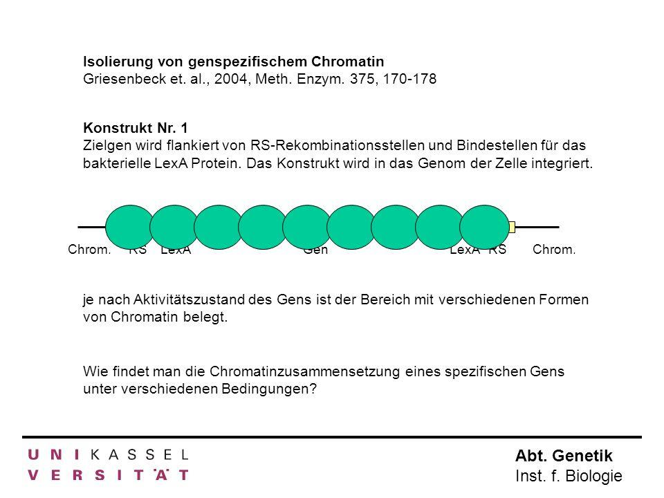 Isolierung von genspezifischem Chromatin