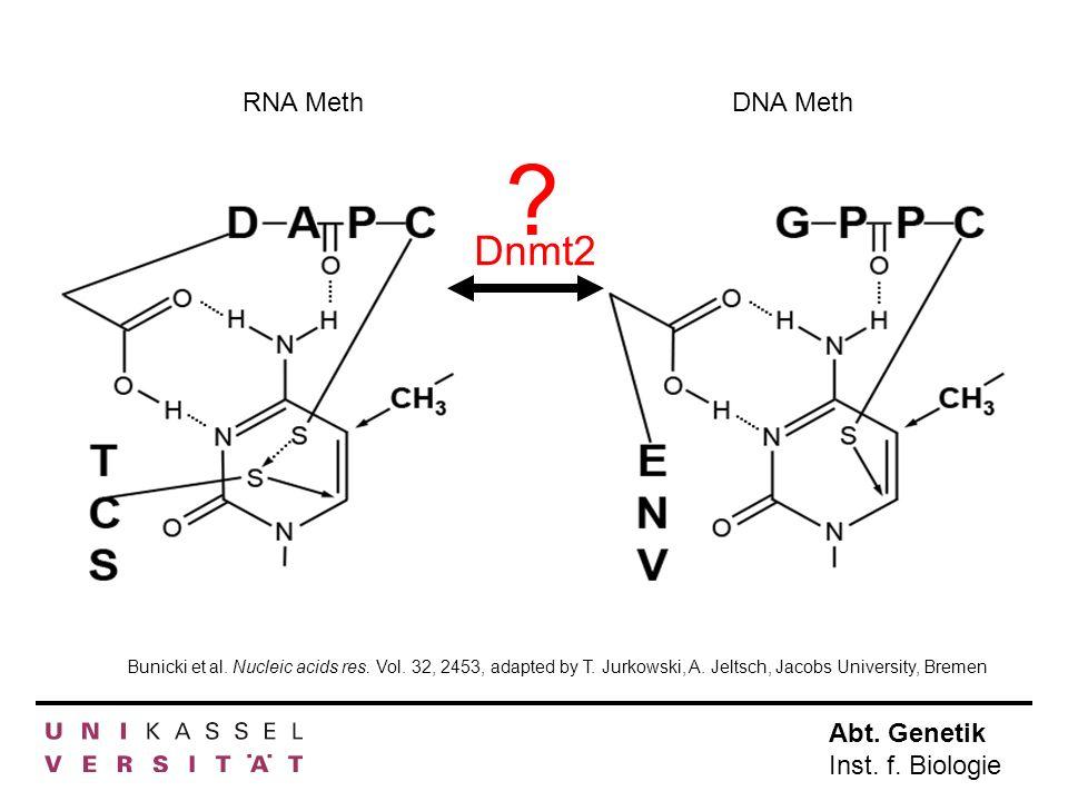 RNA Meth DNA Meth. Dnmt2. . Bunicki et al. Nucleic acids res.